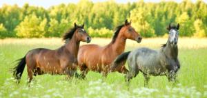 pferde-994x475